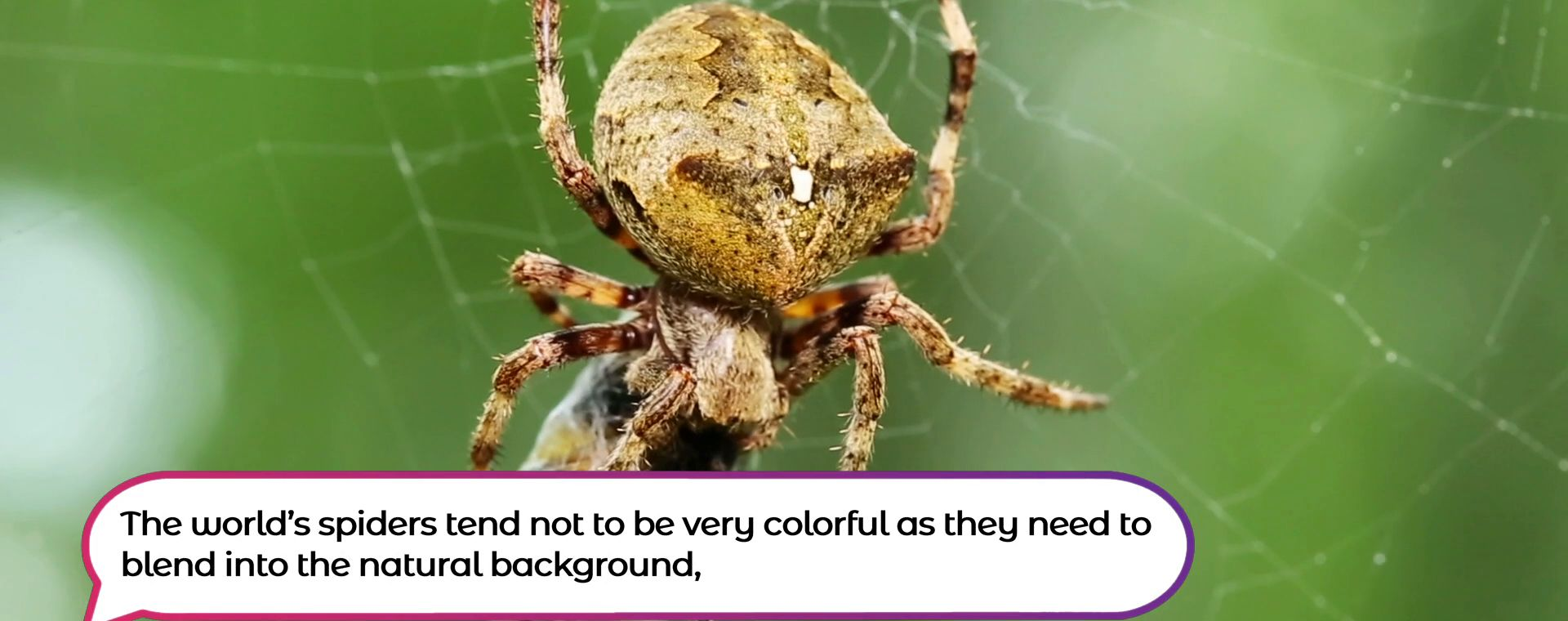 MOST COLORFUL SPIDERS