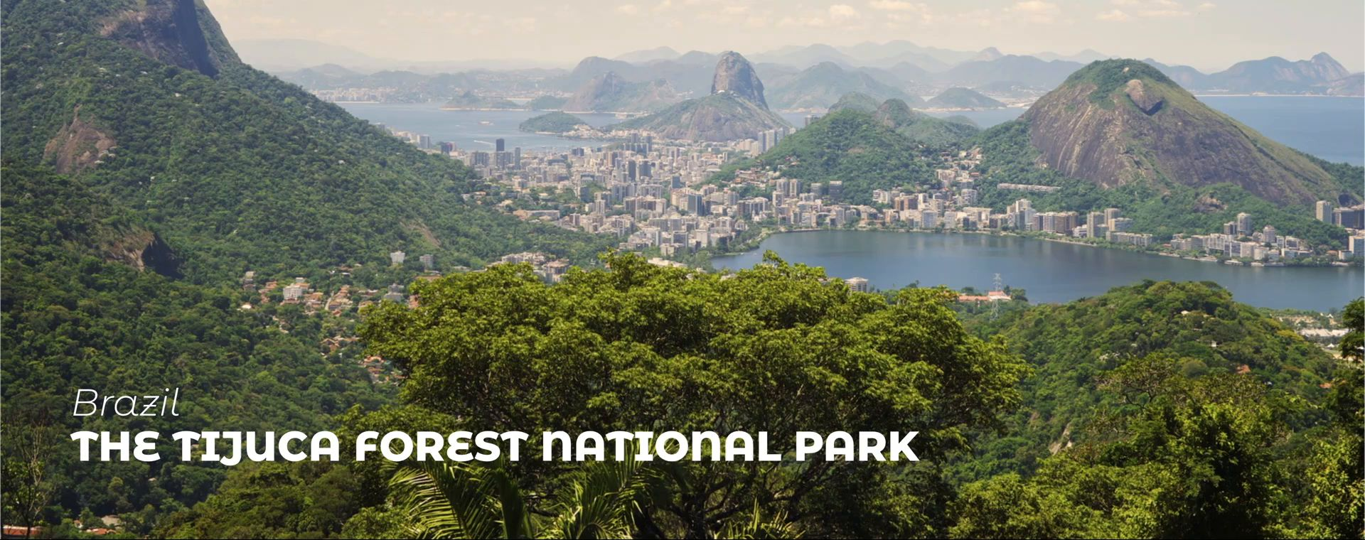 THE TIJUCA FOREST NATIONAL PARK